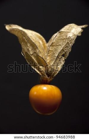 ground-cherry - stock photo