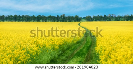Ground road in yellow rapeseed flowers field - stock photo