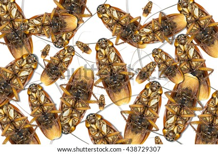 Group dead cockroach isolate on white background,Cockroaches as carriers of disease - stock photo