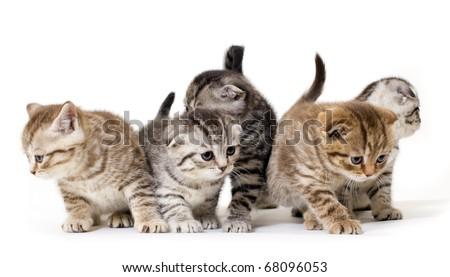 Group  kitties on white background - stock photo