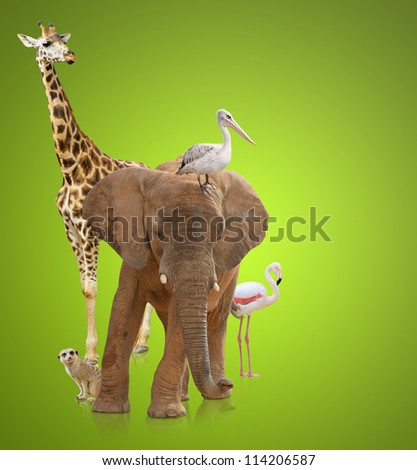 Group Of Animals On Green Background - stock photo