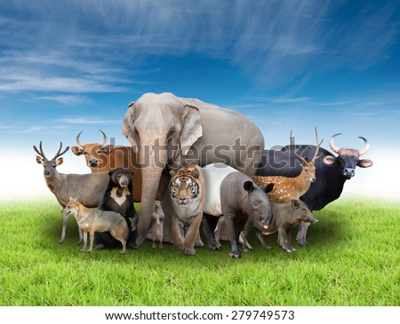 group of asia animals with fresh green grass and blue sky - stock photo