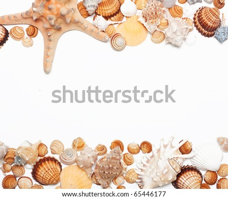 group of Beautiful sea shell. - stock photo