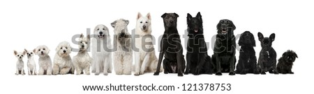 Group of black and white dogs sitting in a row against white background - stock photo