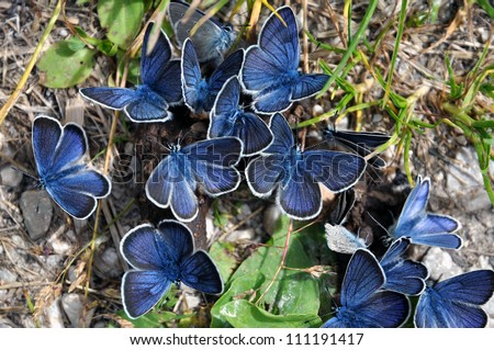 blue butterfly group - photo #45