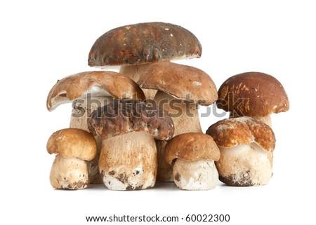group of Boletus Edulis mushroom isolated on white background - stock photo