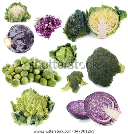 group of cabbages in front of white background - stock photo