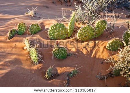 Group of Cactus in the Sand - stock photo