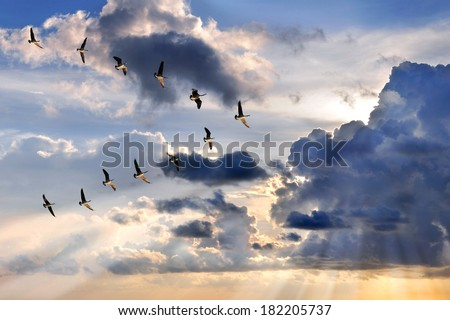 Group of Canadian geese flying in V-formation over sunburst - stock photo