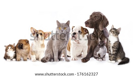 Group of cats and dogs in  white background, cat and dog  - stock photo