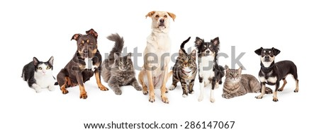 Group of cats and dogs of different sizes and breeds together. Isolated on white. - stock photo