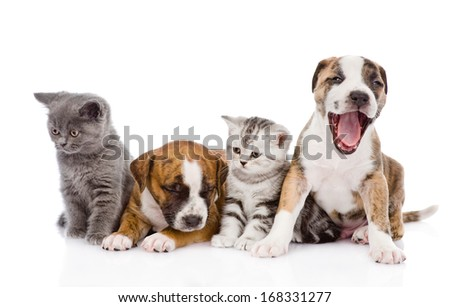 Group of cats and dogs sitting in front. isolated on white background - stock photo