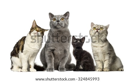 Group of cats in front of a white background - stock photo