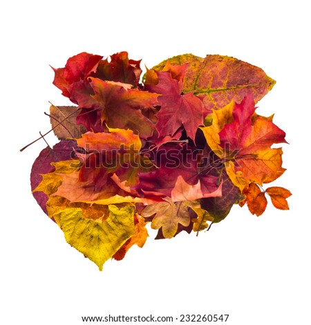 Group of colorful autumn leaves isolated on white background - stock photo