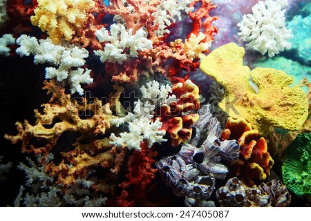 Group of colorful corals close up - stock photo