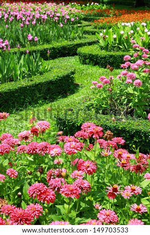 group of colorful flower in garden  - stock photo