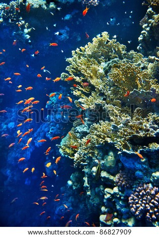 Group of coral fish  blue water. - stock photo