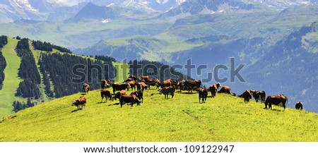 group of cows in the middle of the alpine mountains in summer - stock photo