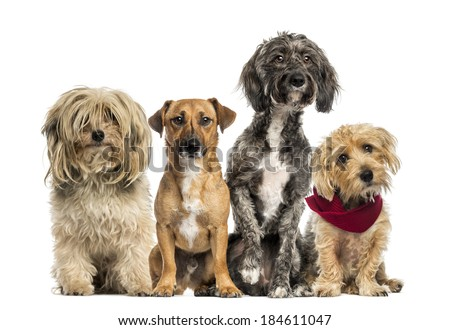 Group of Crossbreed sitting and looking - stock photo