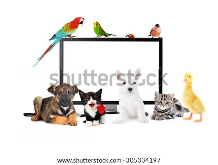 Group of cute animals near TV - stock photo