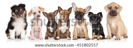 Group of cute puppies. Portrait on white background - stock photo