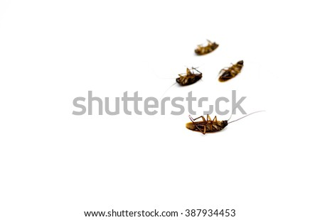 Group of dead cockroach isolated on white background - stock photo