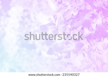 group of dendrobium orchid in soft color , for background - stock photo