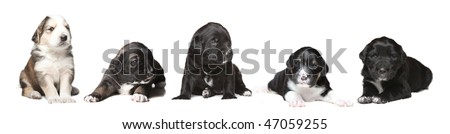 Group of different puppies from the same litter - stock photo