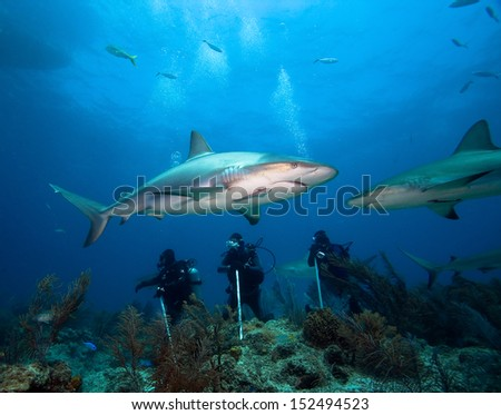 Group of divers and sharks - stock photo