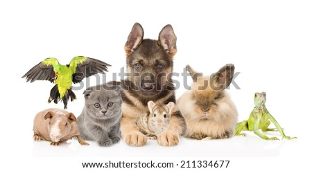 group of diverse animals. isolated on white background - stock photo