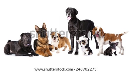 Group of dogs - stock photo