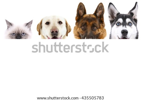 Group of dogs and cat in front of white background with space for your text - stock photo