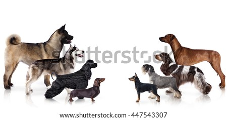 Group of dogs at the exhibition stand, dog profile - stock photo