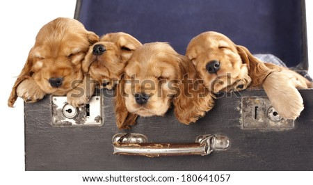 group of dogs is looking up, portrait in profile - stock photo