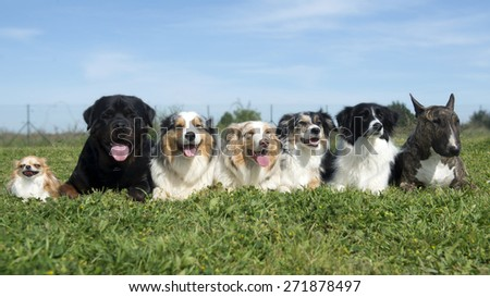 group of dogs lying down in the nature - stock photo