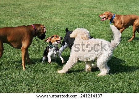 group of dogs playing outdoors - stock photo