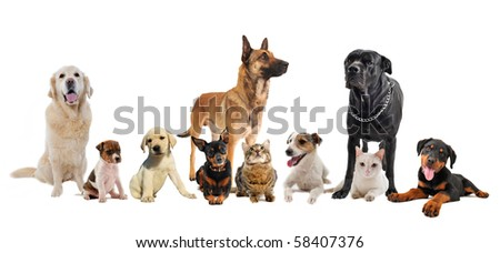 group of dogs, puppies and cats on a white background - stock photo