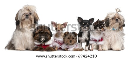 Group of dogs sitting in front of white background - stock photo