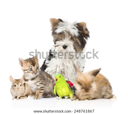 group of domestic animals and birds.  Isolated on white background - stock photo