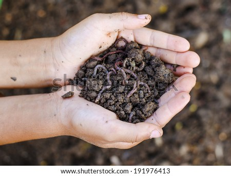 Group of earthworms in hands - stock photo