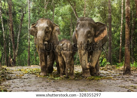 Group of elephant in jungle in rainy. - stock photo