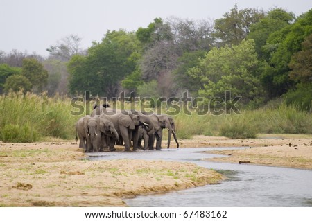 Group of Elephants staying close to each other while drinking from the river. - stock photo
