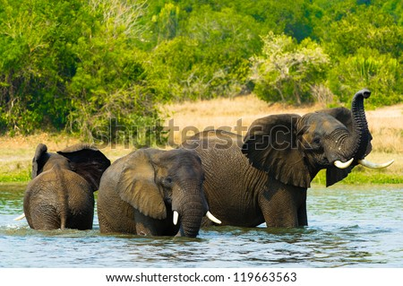 Group of elephants takes shower in the water - stock photo