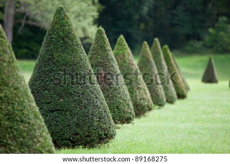 Group of evergreen pruned cone European box tree bushes or conifers on grass in cultivated park on the forest background - stock photo