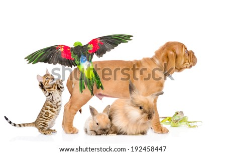 group of exotic pets. isolated on white background - stock photo