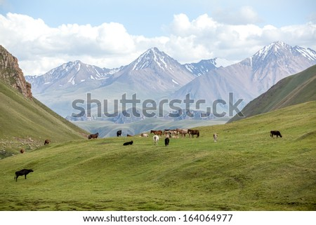 Group of farm animals pasturing in Tien Shan mountains, Kyrgyzstan - stock photo