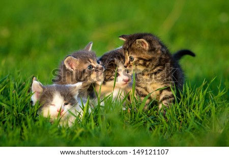 Group of four little kittens on the grass - stock photo