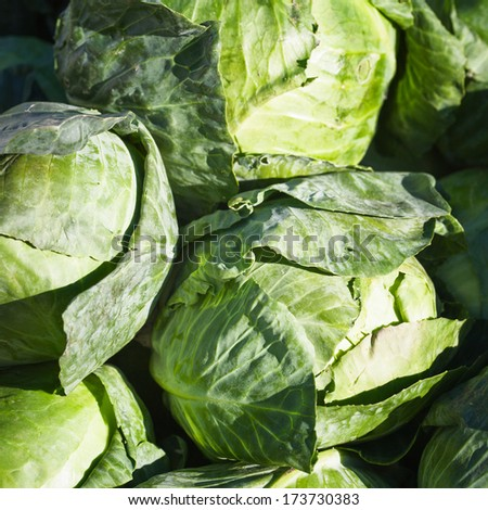 Group of fresh ripe white cabbages at a farmers market - stock photo