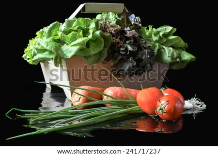 Group of fresh Vegetable in black background - stock photo