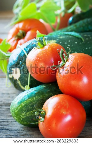 Group of Fresh Vegetable on a Wooden Background. Tomato, Vegetable Marrow, Cucumber. Nature Bio Style - stock photo